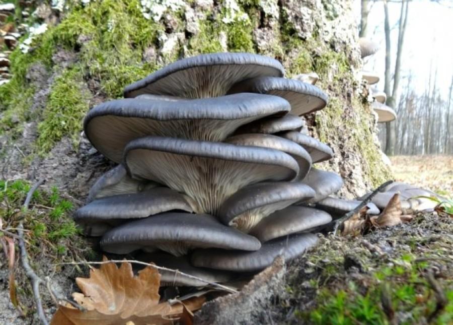 Выращивание грибов как бизнес – помещение, оборудование, сбыт, бизнес-план