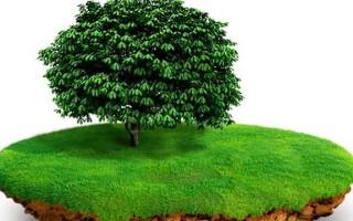 Порядок переоформления земельного участка в собственность по наследству